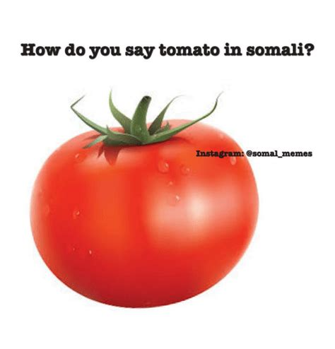 How Do You Say Memes - how do you say tomato in somali instagram memes instagram meme on sizzle