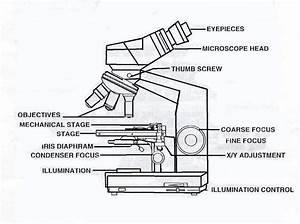 Simple Microscope Drawing At Getdrawings Com