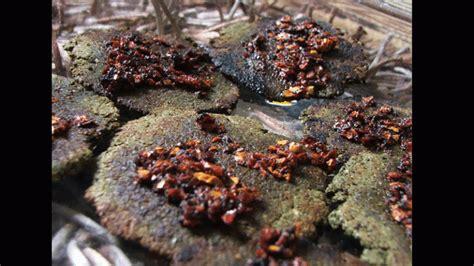siege cook cooking siege in homs syriauntold حكاية ما انحكت