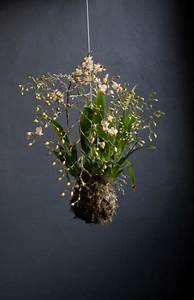 Kokedama Selber Machen : kokedama arte c musgo orchids string garden garden plants ~ Orissabook.com Haus und Dekorationen