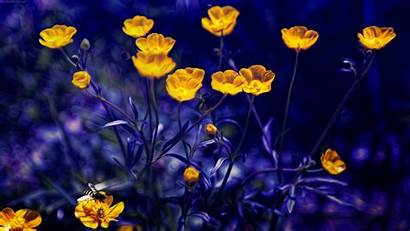 Yellow 4k Flowers Desktop Wallpapers Yesofcorsa