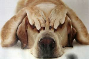 Tips On How Not To Stress Your Pets! - Animal Fair