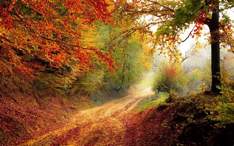 Autumn Roads Wallpapers by Beautiful Autumn Road Wallpapers Hd Wallpapers Id 16828