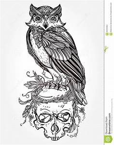 Owl With Ornate Scull Design Vintage Style. Stock Vector ...