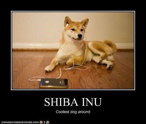 Shiba Inu Meme - shiba inu meme google search shiba inu love pinterest