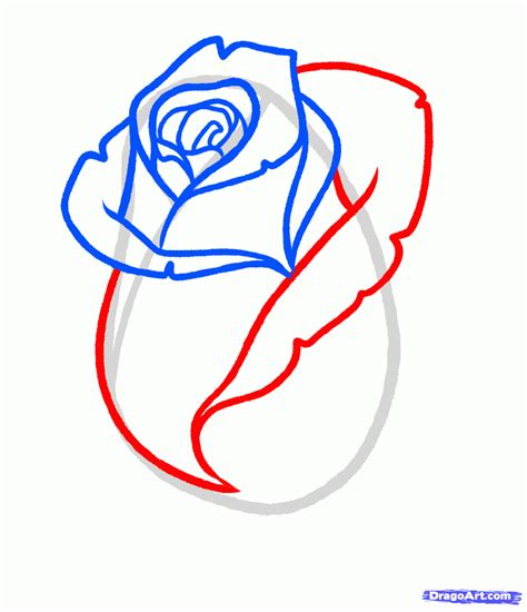 simple blog   draw  rose bud
