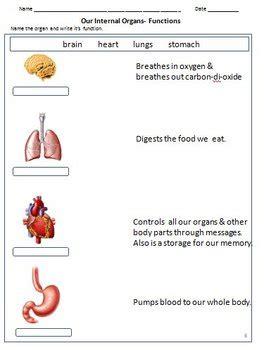 my organs bones joints muscles