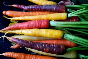 The Root of the Matter: Tubers, Bulbs and Taproots | The ...  Carrot
