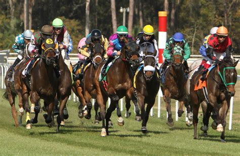 tampa bay downs racing schedule