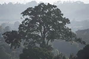 forest restoration saving east africa 39 s trees global trees