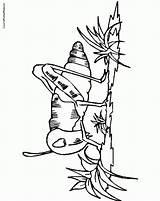 Coloring Cricket Quiet Popular Coloringhome Thanksgiving sketch template