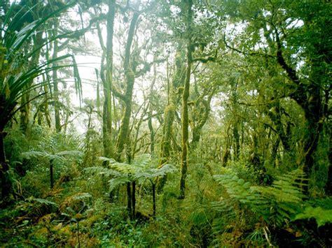 des ta  omorfotera tropika dash gia na prasinisei