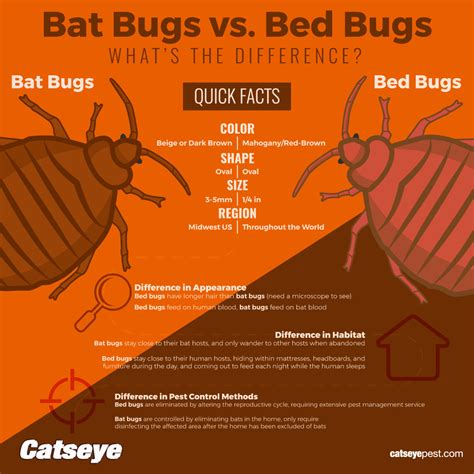 bed bug control   bed bug eggs   pictures