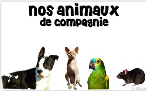 pat les animaux de compagnie les animaux de compagnie accueil