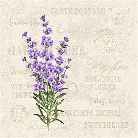 lavender elegant card vintage  kotkoa