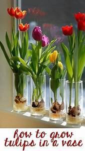 Tulpen Im Glas Ohne Erde : invite nature in with 31 incredible indoor plant ideas ~ Frokenaadalensverden.com Haus und Dekorationen
