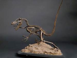 Velociraptor- one of my favorites | Interests and Hobbies ...