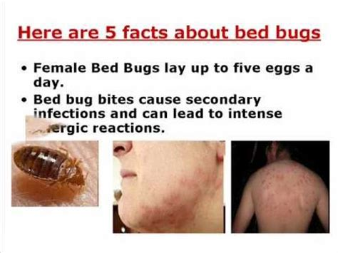 do bed bugs come out when the lights are on what causes bed bugs to come out 28 images signs of