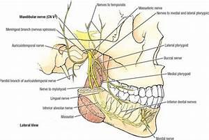 Skull Bones Diagram Temporomandibular Joint