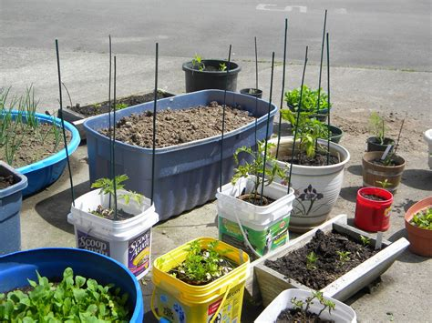 Container Gardening-correia Urban Garden