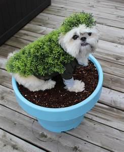 diy costumes for dogs chia pet