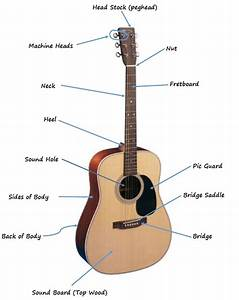 The Parts Of The Acoustic Guitar Diagram
