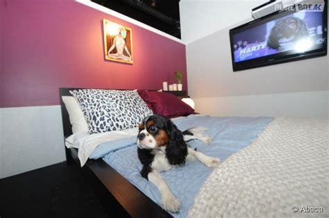 chambre de chien vienne des chambres d 39 hôtel de luxe pour les chiens