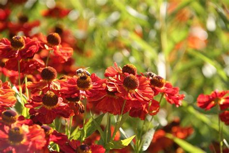 Der Bienenfreundliche Garten by Der Bienenfreundliche Garten Im Sommer