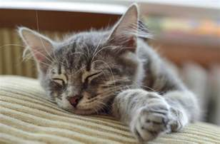 why do cats sleep so much why do cats sleep so much decoding this behavior right here