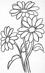 Coloring Margarita Flower Awesome Re Pages Ius Tech Must Know Glass sketch template