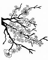 Tree Drawing Japan Blossom Cherry Japanese Coloring Getdrawings sketch template