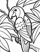 Coloring Birds Pages Parrot Bird Kind Name Knowing sketch template