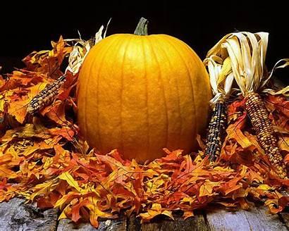 Harvest Autumn Wallpapers Fall Thanksgiving Halloween Pumpkin