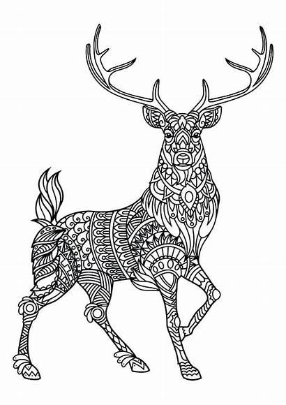 Coloring Animal Pages Mandala Adults Deer