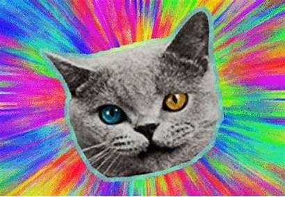 Wang Cat Golf Odd Future Its Wallpapersafari