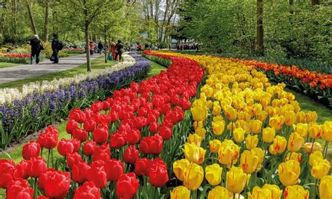 Keukenhof Gardens 2019 (the Garden Of Europe