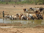 Zdjęcia: Loropeni, Poni, U wodopoju, BURKINA FASO