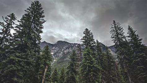 foggy mountain  green trees  stock photo