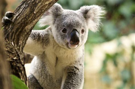 oeffnungszeiten und eintrittspreise des dresdner zoos