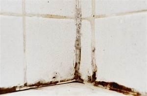 Schimmel In Der Dusche Entfernen : schwarzer schimmel im haus ursachen entfernen ~ Buech-reservation.com Haus und Dekorationen