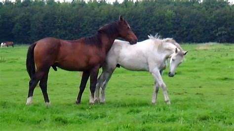 horses horse field paddock play stabilized knowledge essential happy things