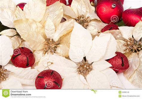 group of poinsettias stock image image of christmas