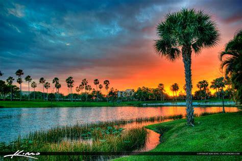 palm tree at lake property sunset palm gardens