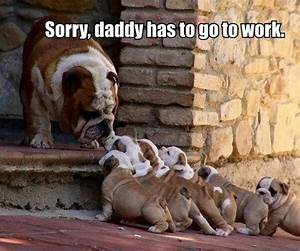 funny animal memes, animal pictures with captions, funny ...