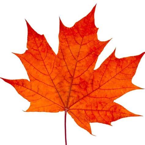 Au Revoir David Archuleta Canada Tour Ticket Sales Start Lds Ylcfans Of David Archuleta