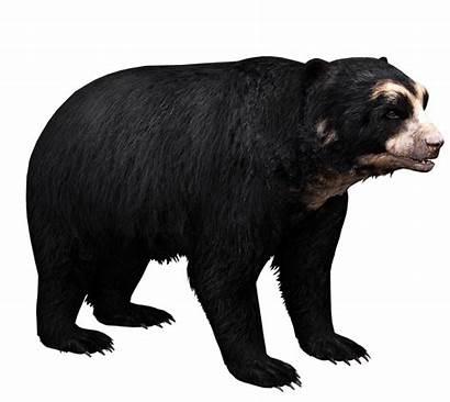 Bear Spectacled Aurora Zt2
