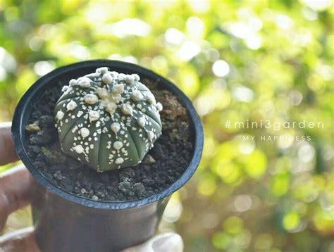 #Astrophytum #แอสโตร ในปี 2021 | แอสโตร, ถาด, สวน