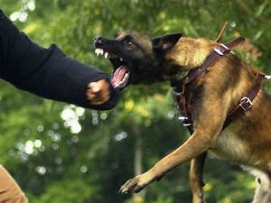 Police Patrol Dogs - Police & Military K9 Sales and Training