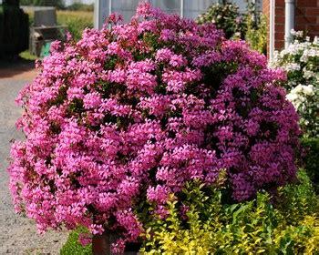 une jardini 232 re de fleurs pour l 233 t 233 jardipartage