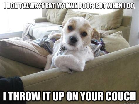 dog memes  respectable dog person